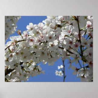 Árbol blanco que florece en primavera impresiones
