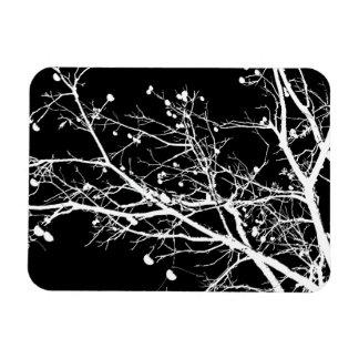 Árbol blanco y negro del invierno imán de vinilo