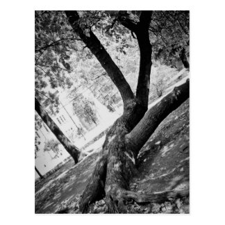Árbol blanco y negro tarjetas postales
