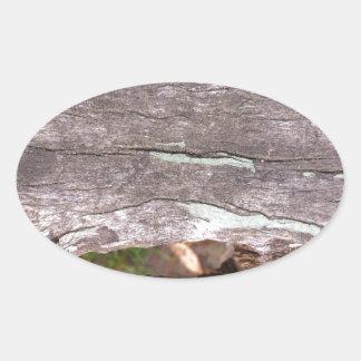 Árbol blanqueado sol caido con el punto hueco calcomania óval personalizadas