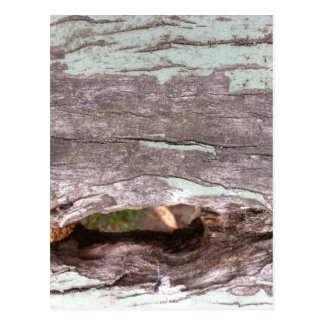 Árbol blanqueado sol caido con el punto hueco postal