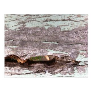 Árbol blanqueado sol caido con el punto hueco postales