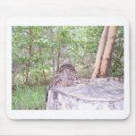 Árbol caido con el tocón en bosque tapete de ratones