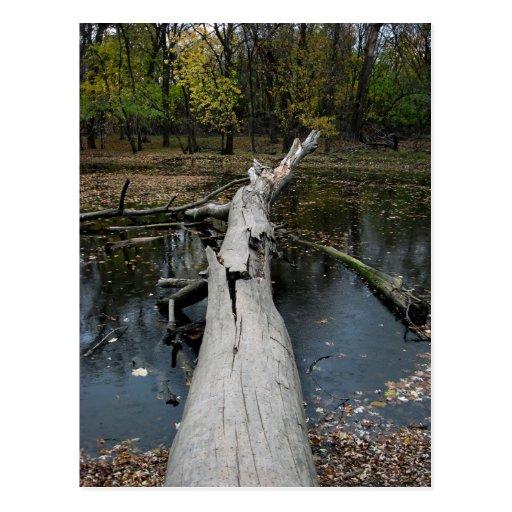 Árbol caido en otoño tarjeta postal