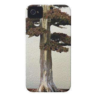 Árbol chino de los bonsais del enebro Case-Mate iPhone 4 funda