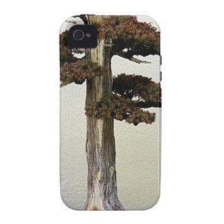Árbol chino de los bonsais del enebro iPhone 4/4S fundas