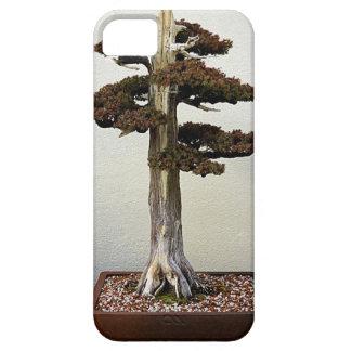 Árbol chino de los bonsais del enebro iPhone 5 Case-Mate fundas