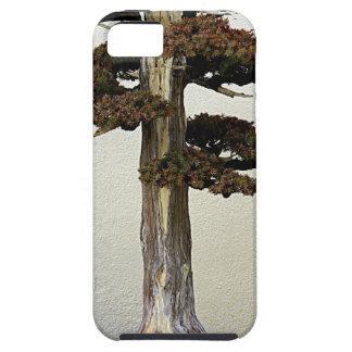 Árbol chino de los bonsais del enebro iPhone 5 Case-Mate carcasas