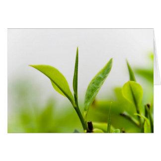 """Árbol chino del té, """"brote y dos hojas"""" (lanzamien felicitacion"""