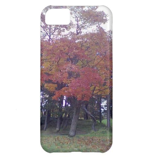 Árbol coloreado otoño funda para iPhone 5C