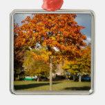 Árbol colorido del otoño adorno