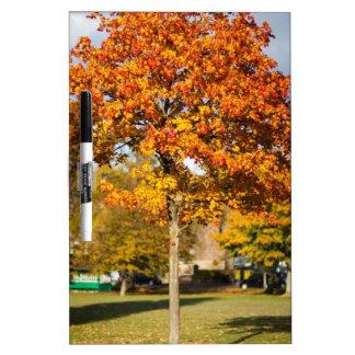 Árbol colorido del otoño tablero blanco