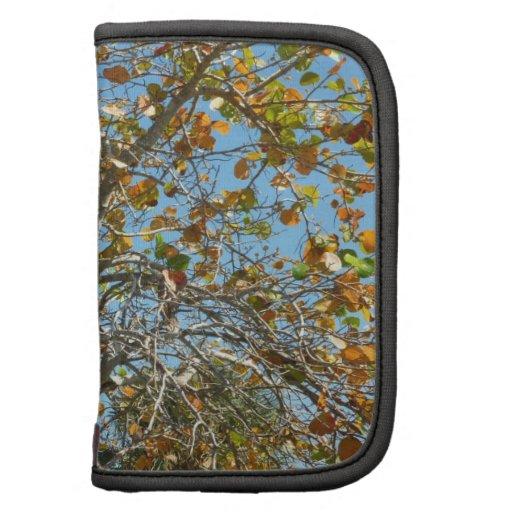 Árbol colorido del seagrape contra el cielo azul d planificadores