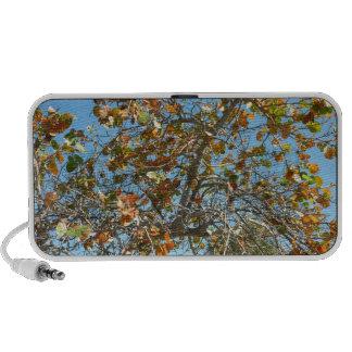 Árbol colorido del seagrape contra el cielo azul d mp3 altavoz