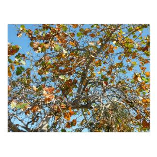 Árbol colorido del seagrape contra el cielo azul postal