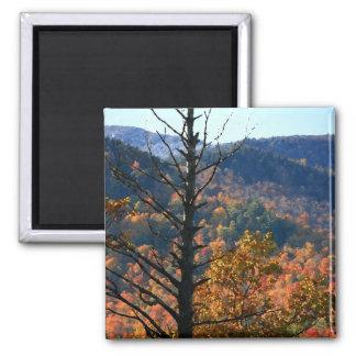 Árbol con las montañas - imán del Adirondacks