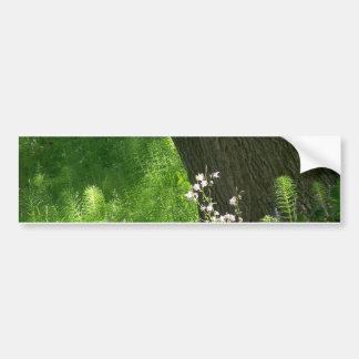 Árbol con los helechos etiqueta de parachoque