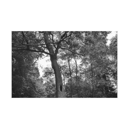 Árbol con un agujero misterioso impresiones en lona estiradas