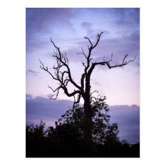 Árbol crepuscular postales