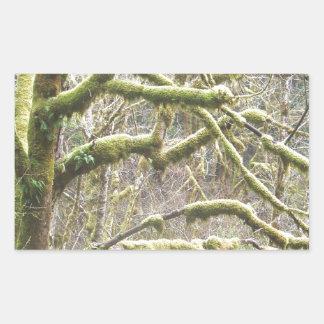Árbol cubierto de musgo pegatina rectangular