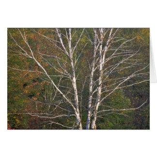 Árbol de abedul blanco abstracto al borde de un ha tarjeta de felicitación