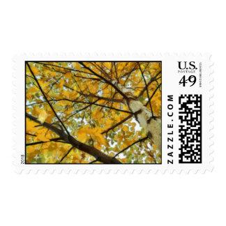 Árbol de abedul del otoño en franqueo amarillo