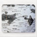 Árbol de abedul en el bosque, detalle, con el musg tapete de raton
