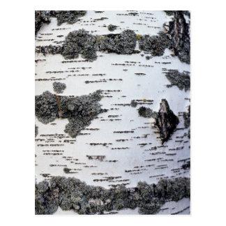 Árbol de abedul en el bosque, detalle, con el musg tarjetas postales
