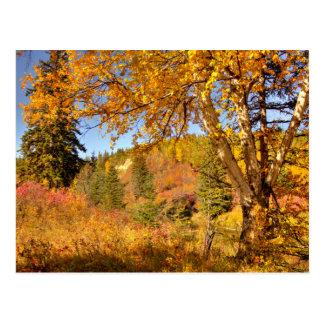 Árbol de abedul en otoño tarjeta postal