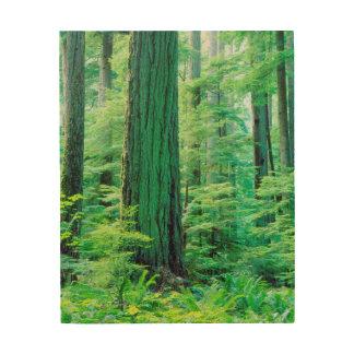 Árbol de abeto de douglas cuadros de madera