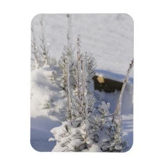 Árbol de abeto helado con nieve imán foto rectangular