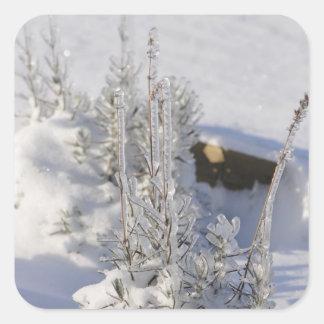 Árbol de abeto helado con nieve colcomanias cuadradas