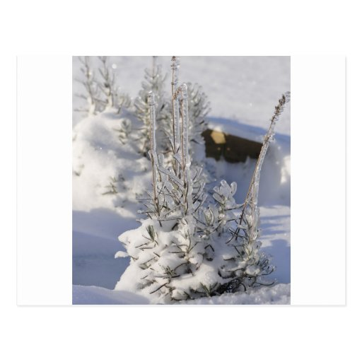 Árbol de abeto helado con nieve postal