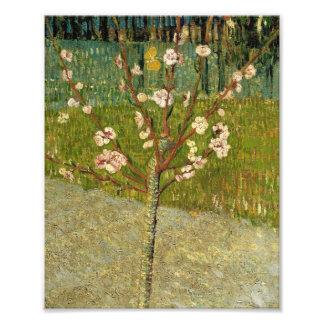 Árbol de almendra de Vincent van Gogh en vintage d Cojinete