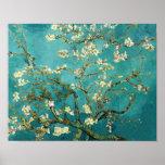 Árbol de almendra floreciente de Van Gogh Póster