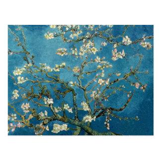 Árbol de almendra floreciente de Vincent van Gogh Postales