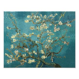 Árbol de almendra floreciente - Van Gogh Arte Fotografico