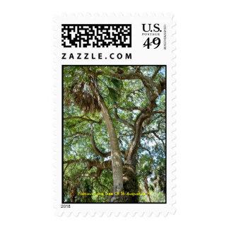 Árbol de amor famoso de St Augustine la Florida Sello
