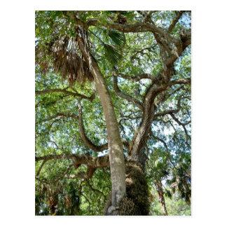 Árbol de amor famoso St Augustine la Florida Tarjetas Postales
