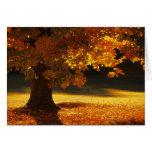 Árbol de arce, Bennington, Vermont Tarjeta De Felicitación