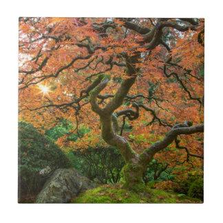 Árbol de arce en los jardines del japonés en otoño azulejo cuadrado pequeño