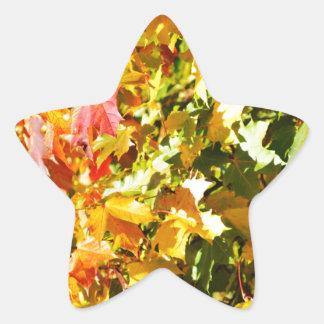Árbol de arce en otoño pegatina en forma de estrella
