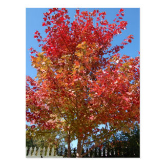 Árbol de arce en otoño postal