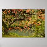Árbol de arce en poste japonés del jardín de Portl Impresiones