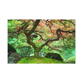 Árbol de arce japonés impresion de lienzo