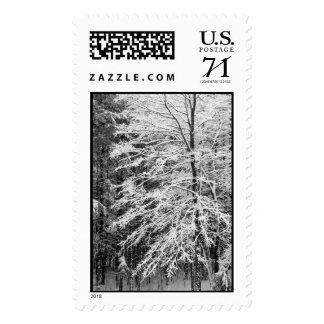 Árbol de arce resumido en la nieve - grande sello
