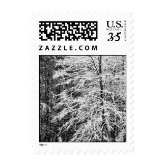 Árbol de arce resumido en la nieve - pequeña sellos