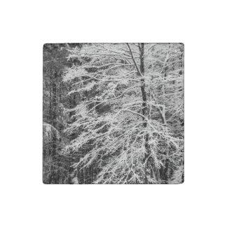 Árbol de arce resumido en nieve imán de piedra