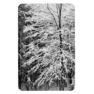 Árbol de arce resumido en nieve imanes de vinilo