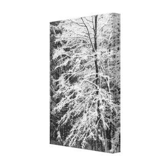 Árbol de arce resumido en nieve impresiones en lienzo estiradas
